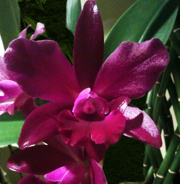orchid flower meaning  sage spa, Natural flower