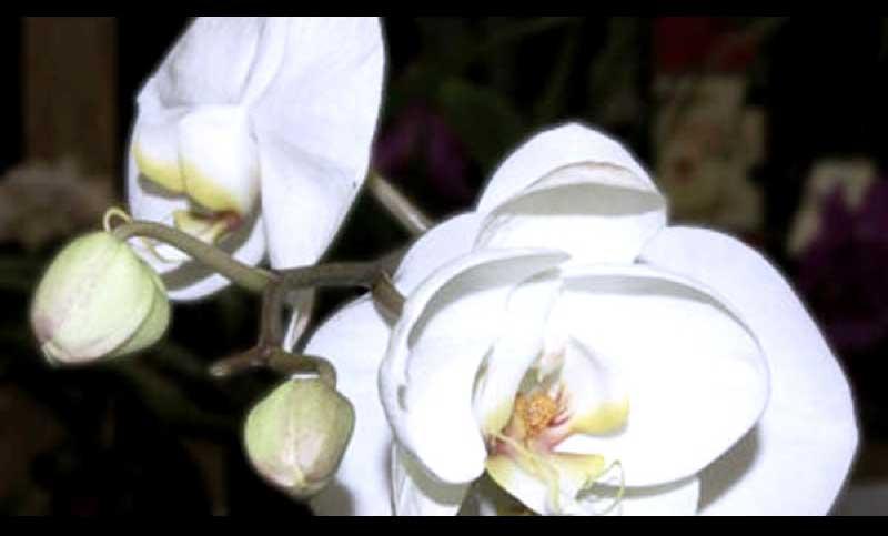 Bloom_web