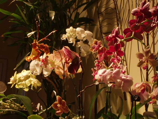 Sage-Spa-Orchid-Show2011
