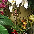 Orchids at Sage