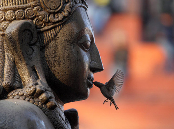 Buddah and bird_500